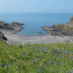 Bluebells above a Pembrokeshire Bay
