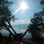 Interesting Tree by Loch Lomond with the sun high in the sky