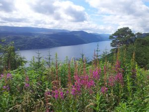 View over Loch Ness with Rosebay Willowherbs in the foreground - Great Glen Way