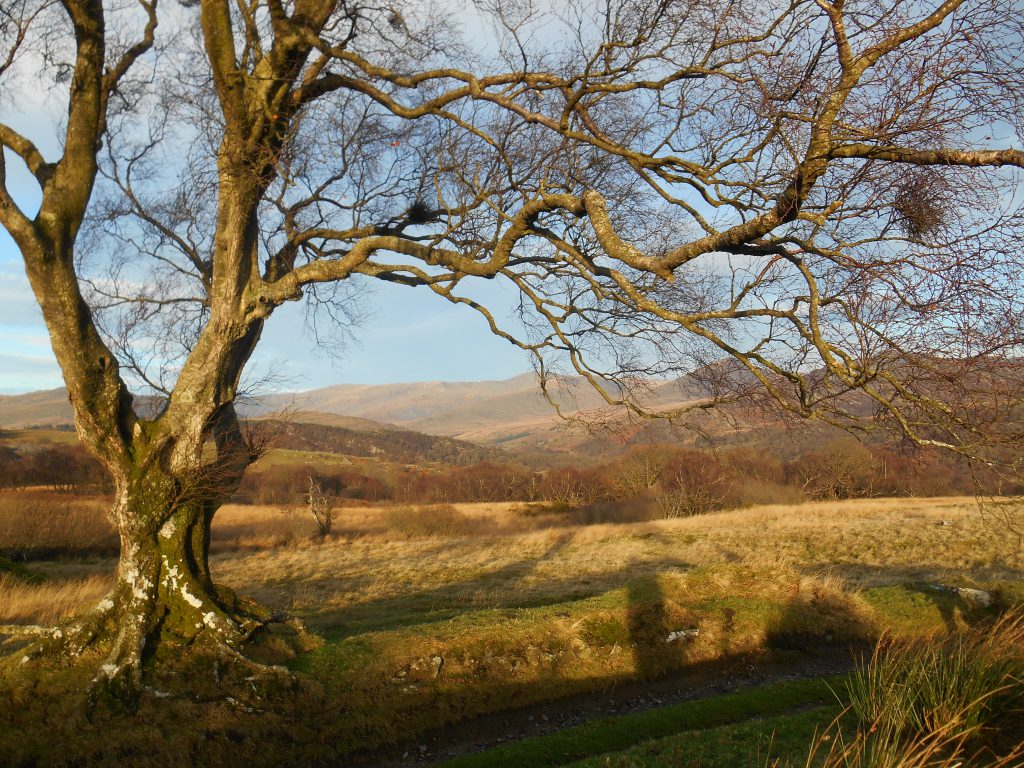 Tree with no leaves on a clear, sunny day - Snowdonia Way