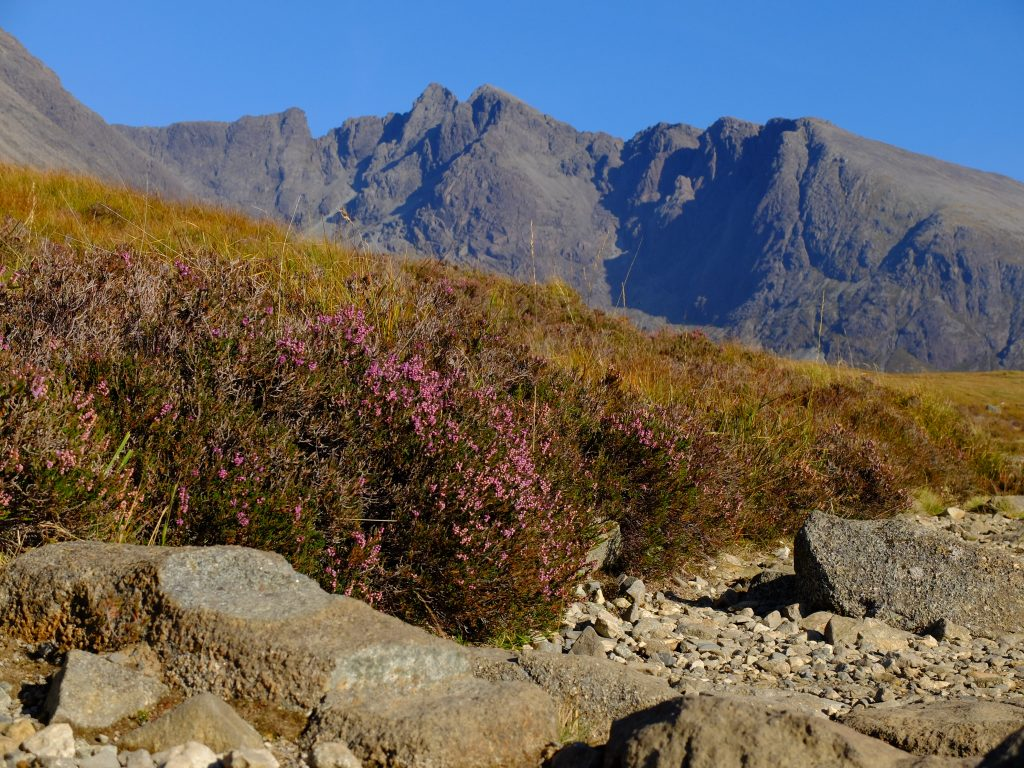 Heather and footpath with Coire Lagan and Cuillin Ridge in the background - Skye Cuillin Munros