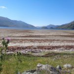 Thistles by Loch Nevis on The North West Wilderness